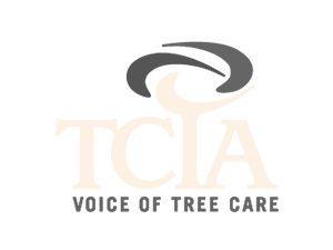Cutting Edge Tree Professionals Tree Services In State