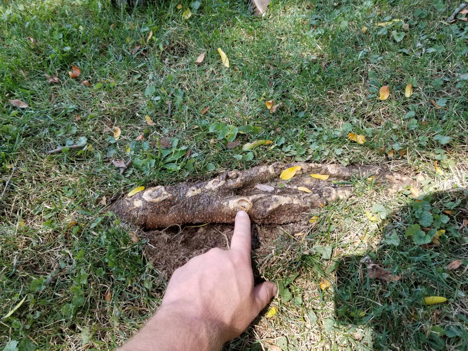 Blog - Cutting Edge Tree Professionals - Tree Root Damage