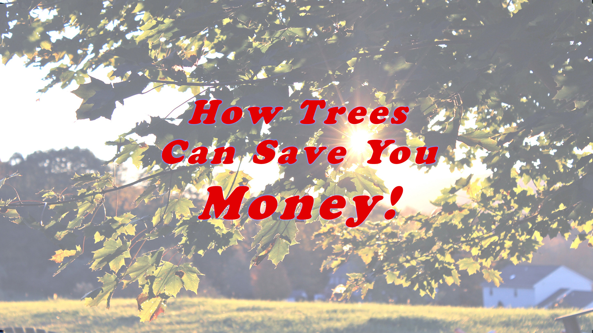 Blog - Cutting Edge Tree Professionals - How Trees Help You Save Money_v4