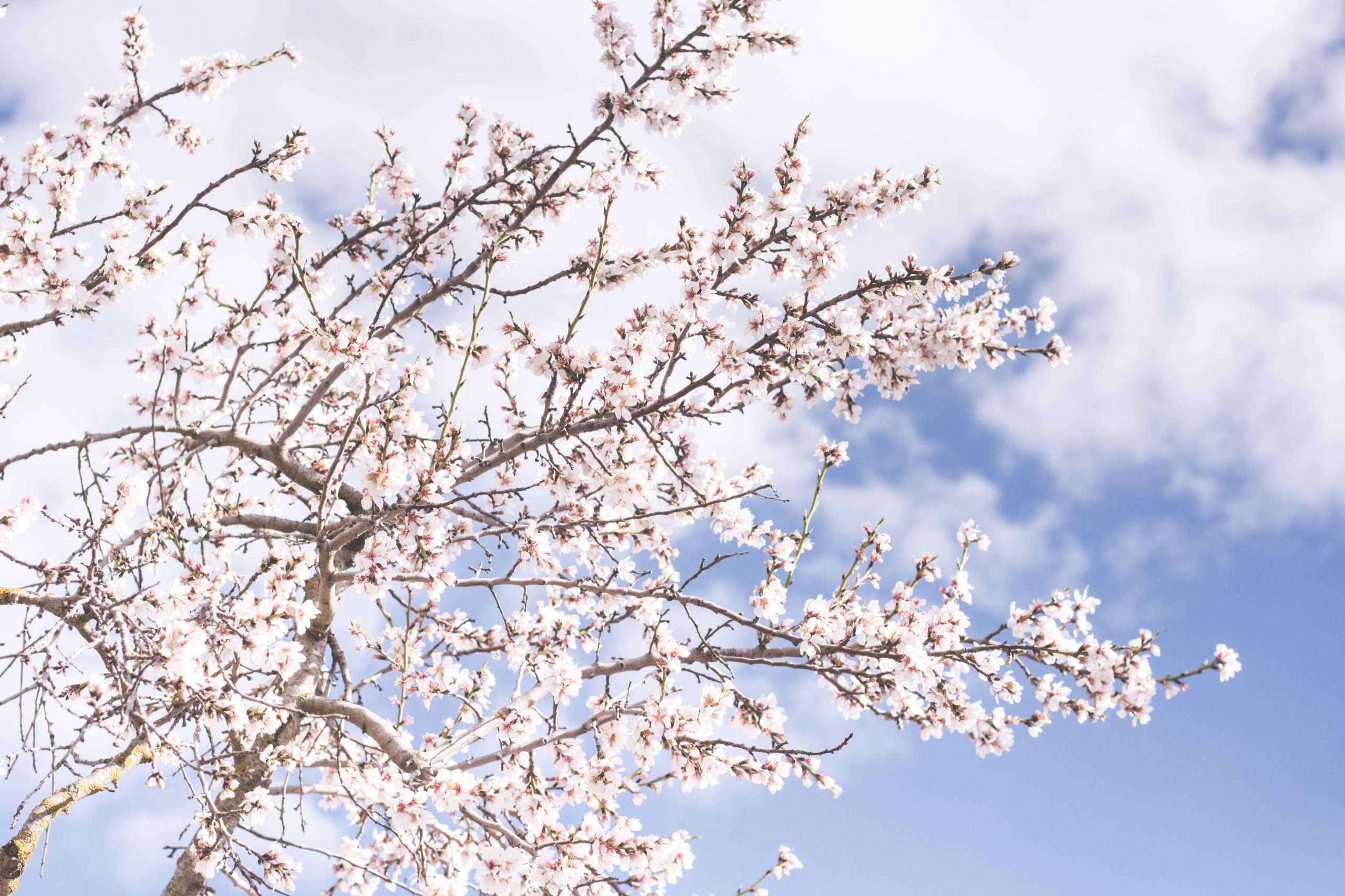 Cutting Edge Tree Professionals_Best Flowering Trees to Plant in Pennsylvania