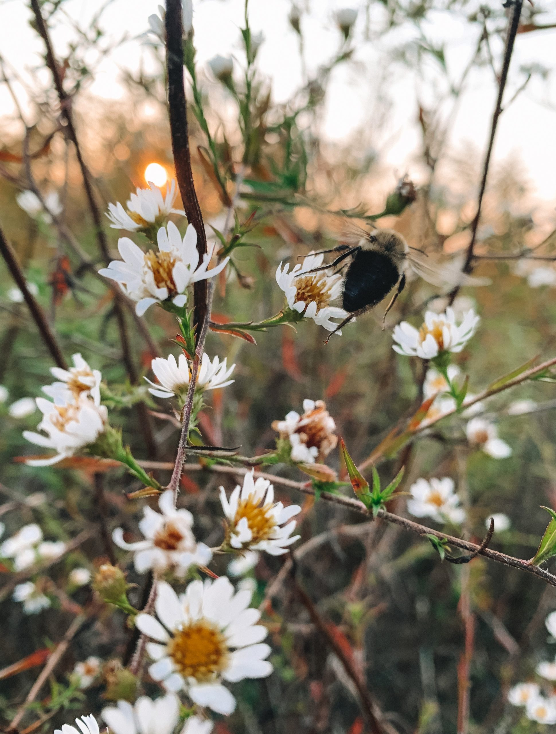 Helping Pollinators in the fall